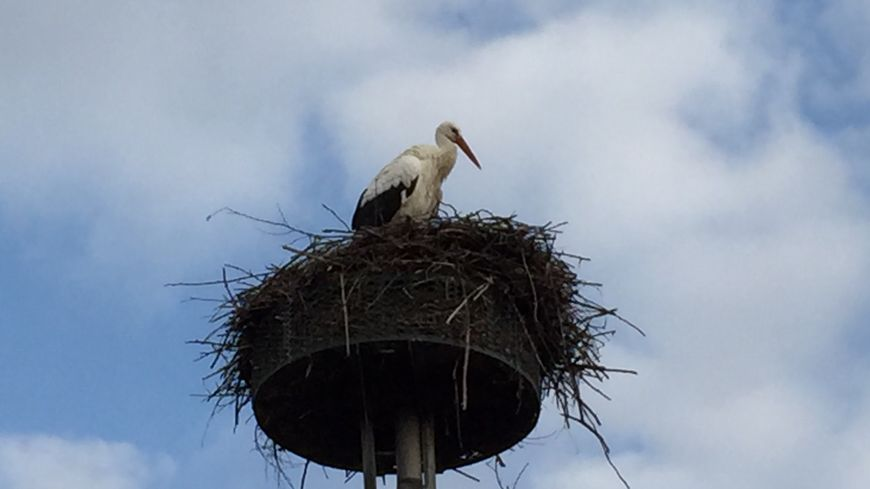 De nombreuses cigognes ont élu domicile à Saint-Nicolas-de-Port. La ville compte une cinquantaine de nids !