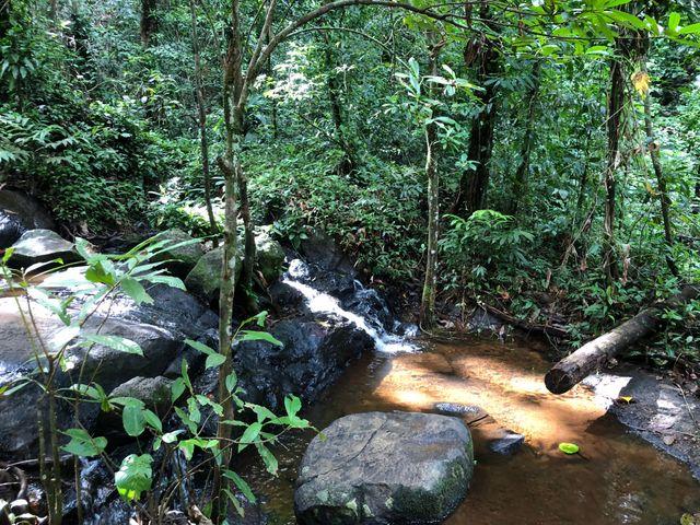Le projet minier de l'ouest guyanais est jugé dangereux pour la forêt et son écosystème