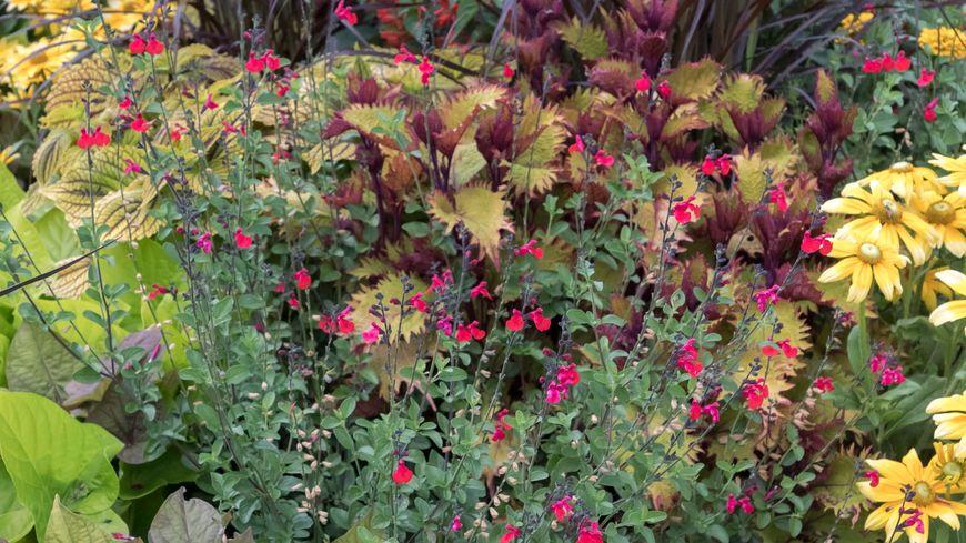 Les plantes sont aux petits soins pour les membres de leur famille !