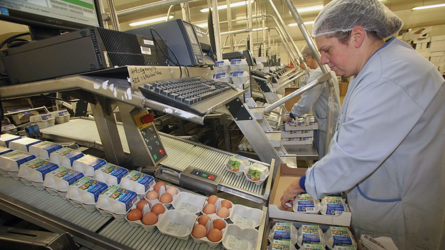 Les œufs sont conditionnés dans l'usine de La Bazoge