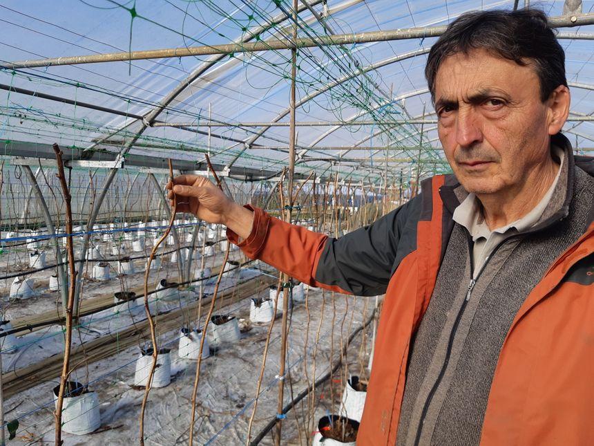 L'exploitation de Gérard Boissieras à Juillac est l'une des plus importantes productrices de framboises en Corrèze