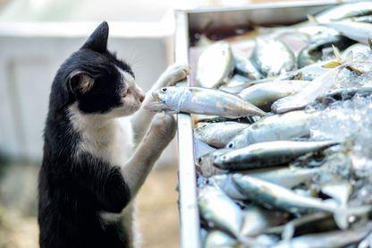 Des croquettes a base d'insectes pour nourrir les chats