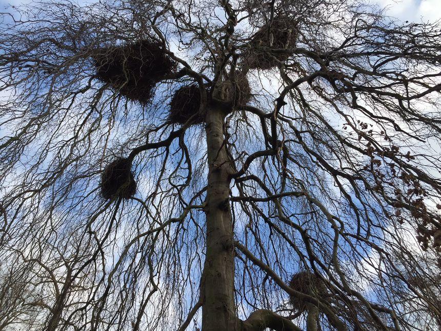Un nid de cigogne, comme ici à la Villa Malraux, peut peser jusqu'à 300 kg