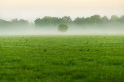 Prairie normande