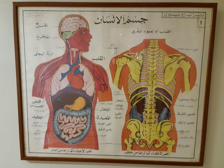 Voyage avec cette planche d'anatomie en arabe