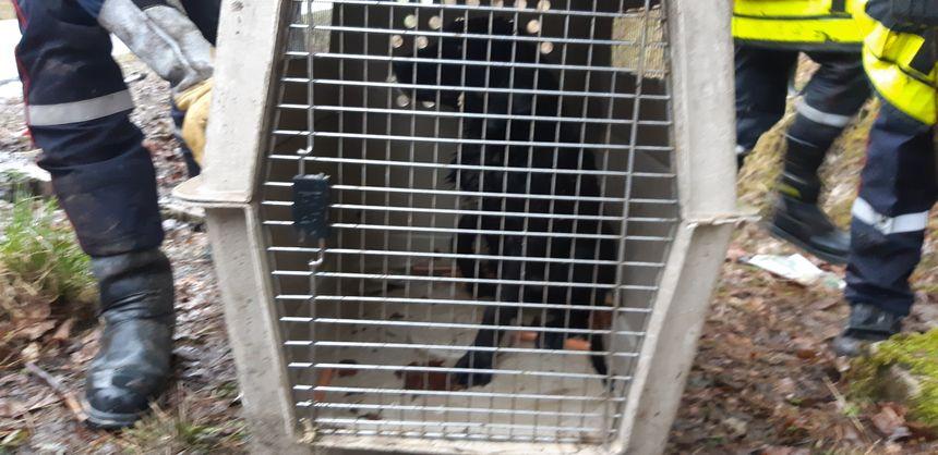 L'animal a été transporté dans une clinique vétérinaire belfortaine
