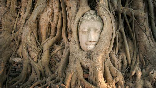 Épisode 2 : Qui était le Bouddha ?