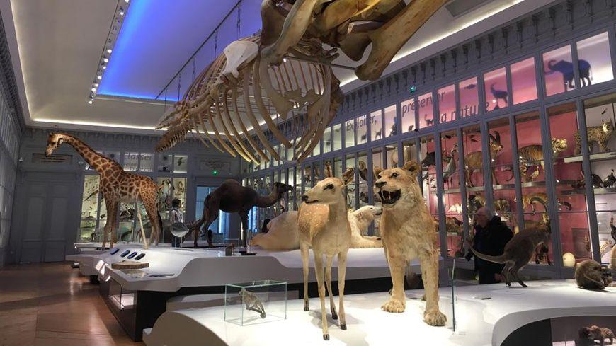La grande salle du Muséum de Bordeaux a fait peau neuve