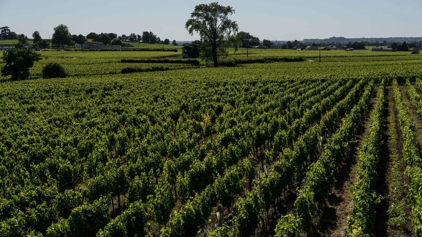 Les vignes de Saint-Emilion prisées par les Chinois