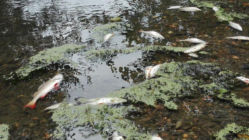 Pollution de la Seiche : des peines d'amende requises contre Lactalis et SPX Flow Technology