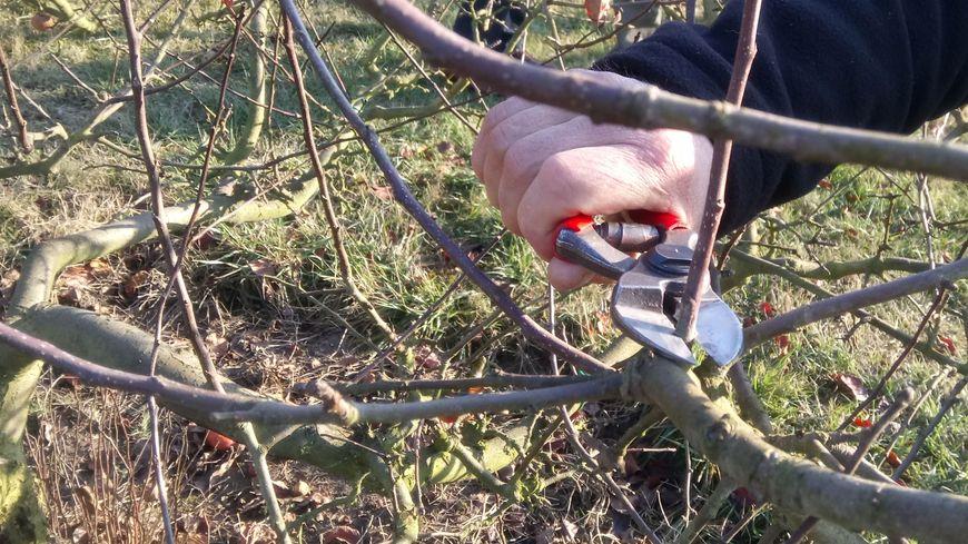 Les métiers de l'horticulture à l'honneur ce samedi 2 mars à Villers-lès-Nancy (photo d'illustration)