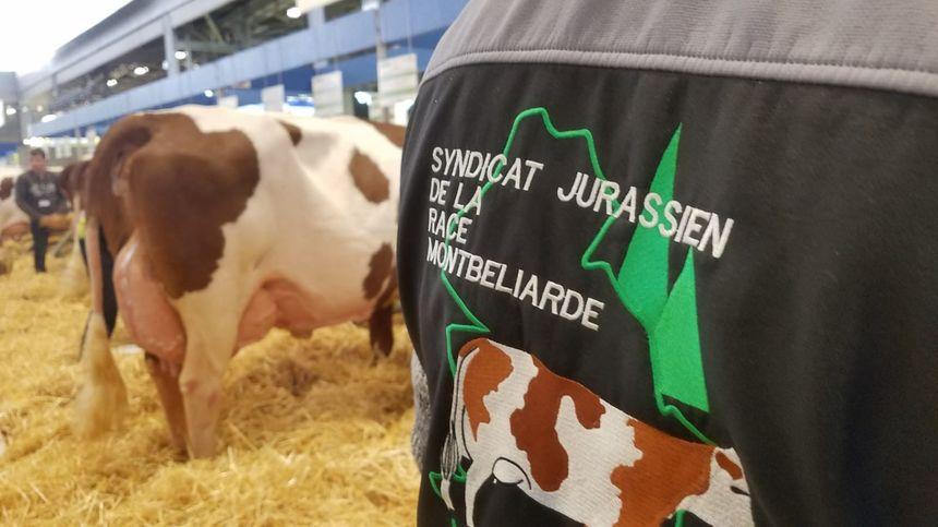 Les vaches francs-comtoises et leurs éleveurs sont mis à l'honneur ce dimanche au Salon de l'Agriculture