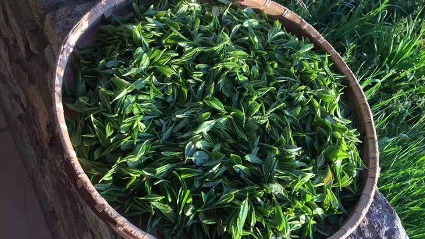 Le thé de la vallée du Blavet à Languidic