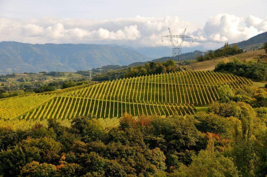Le vignoble de la Cave du Vigneron Savoyard peut être sauvé grâce à un financement participatif