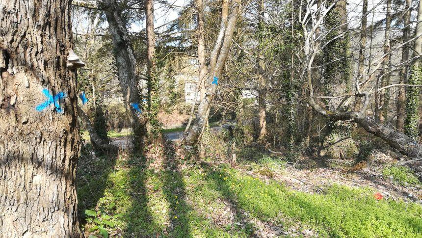Le projet nécessitera l'abattage de quelques arbres