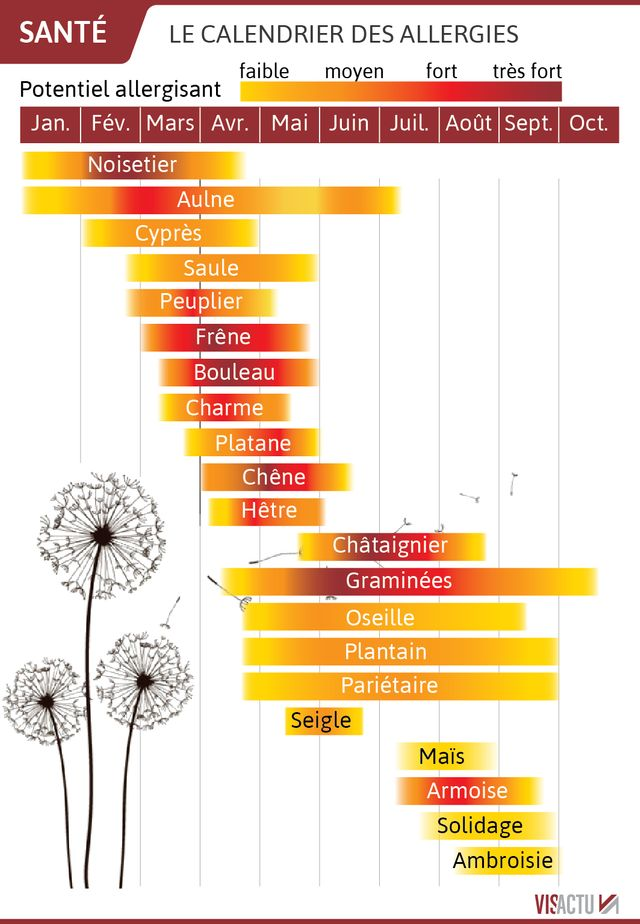 Le calendrier des allergies aux pollens