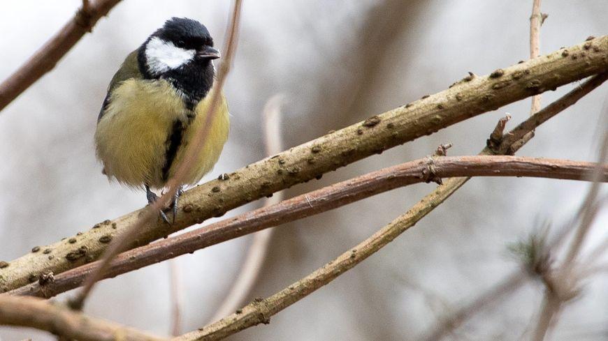 Un tiers des oiseaux sauvages de nos campagnes et forêts ont disparu ces 20 dernières années