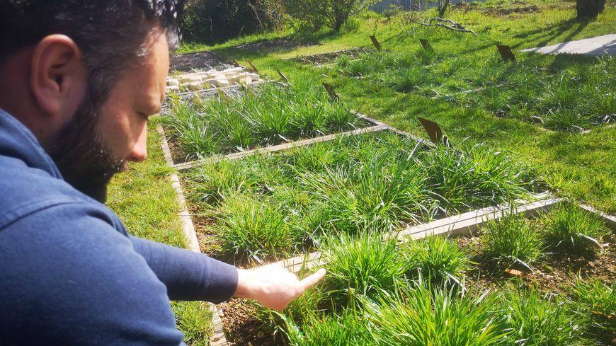 Julien Le Marcis, le directeur du centre horticole, montre la pollinisation des graminées, qui vient à peine de débuter.