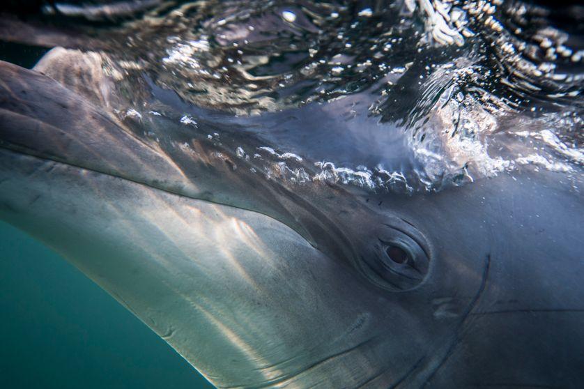 Le miroir des dauphins - Ép. 2/4 - Oublier Moby Dick