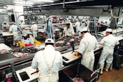 Usine de transformation de poissons à Lorient en 2001