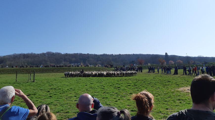 150 brebis ont quitté la ferme de Pixérécourt