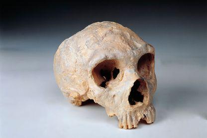 Exemple de crâne de Néandertal