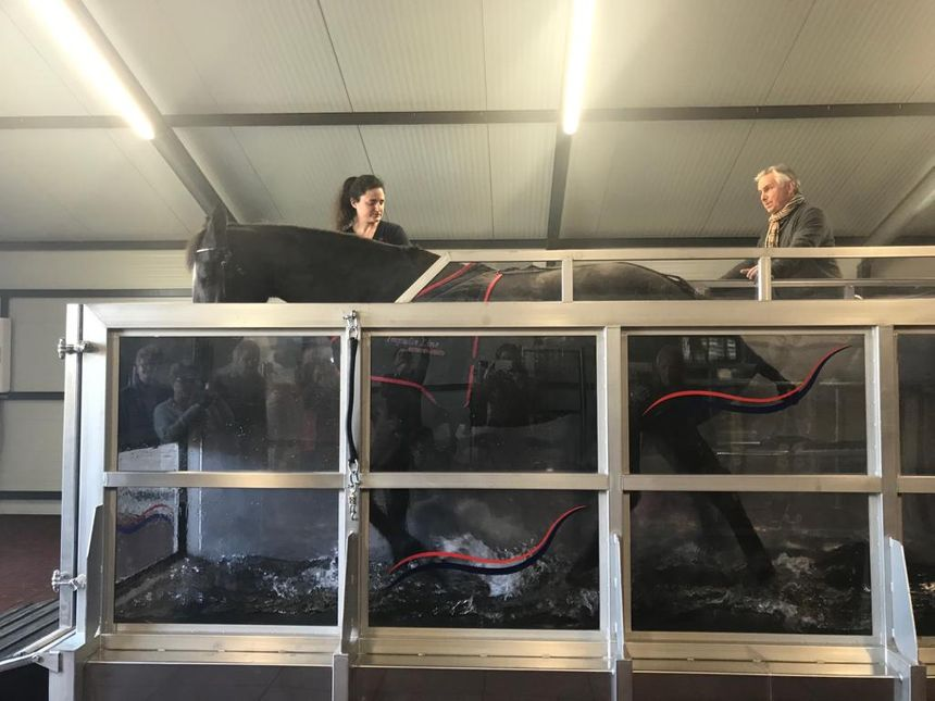 Les chevaux font des séances de 15 à 25 minutes sur le tapis de course immergé