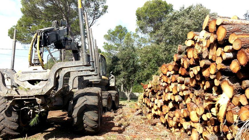 Les bois des 71 propriétaires d'Uchaux sont vendus pour de la pâte à papier ou des chaufferies collectives