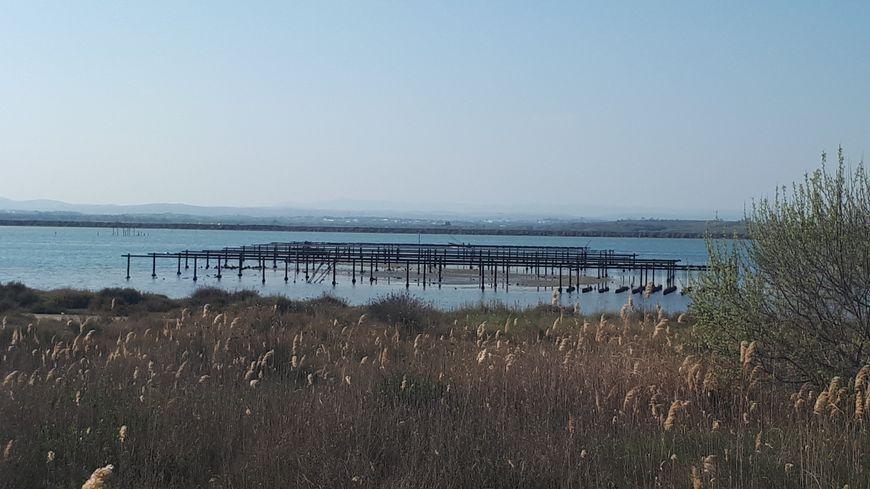 L'étang du Prévost côté Palavas-les-Flots