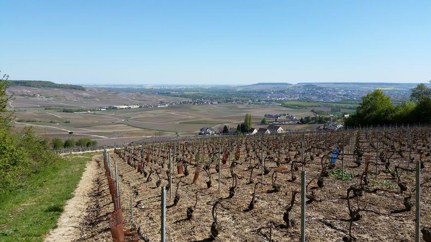 Le champagne (ici, vue d'Épernay et sur les vignes depuis les coteaux) a la cote à l'étranger, et notamment hors Europe.
