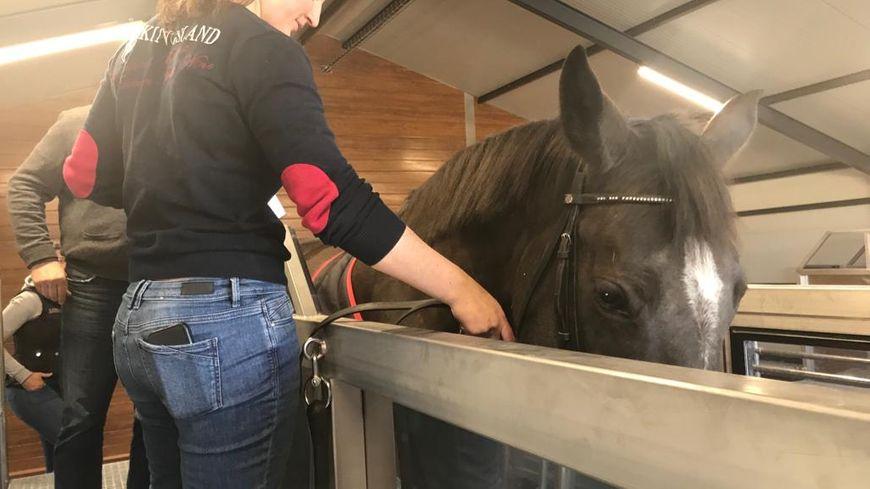 Mélanie Pinchault a investi dans une balnéothérapie pour aider les chevaux à se maintenir en forme