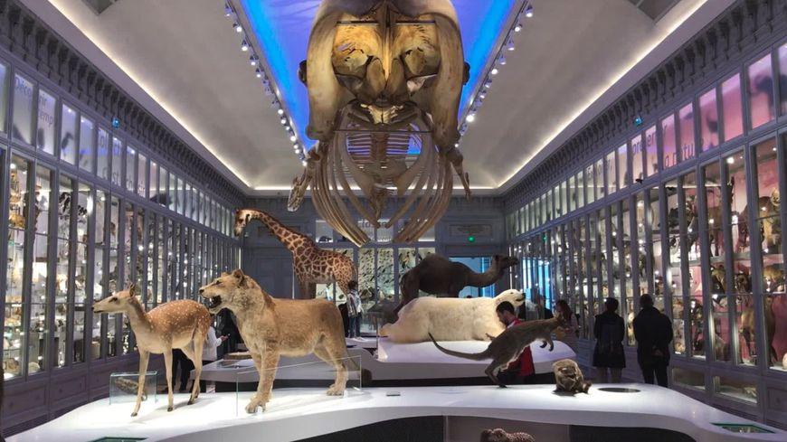 VIDÉO - Visitez en avant-première le nouveau Museum de Bordeaux
