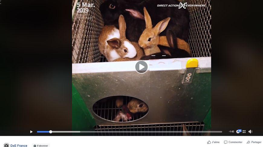 Des militants de la cause animale se sont introduits dans un élevage de lapins à Allex dans la Drôme