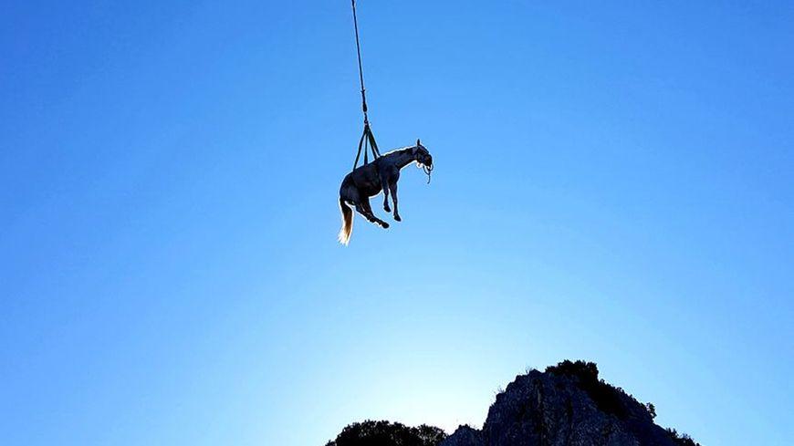Rio le cheval suspendu dans les airs au dessus de la paroi