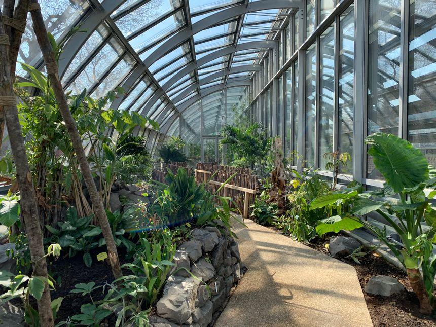 Les nouvelles serres tropicales abritent 1.000 plantes issues de quatre continents.
