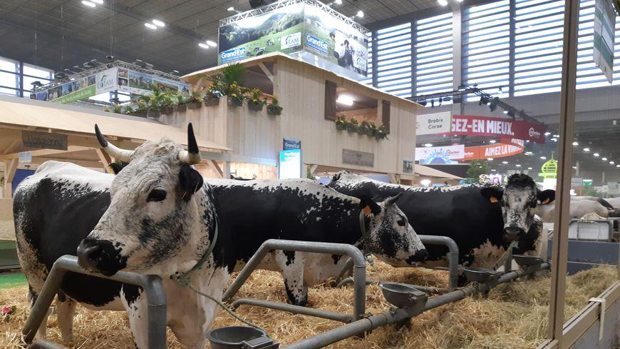 Salon de l'agriculture : le résumé en images.