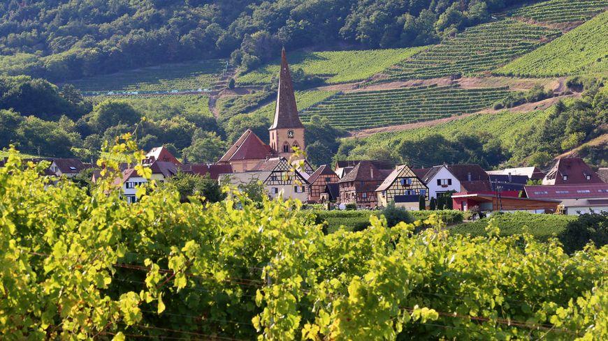 """Résultat de recherche d'images pour """"vignobles en Alsace photos"""""""