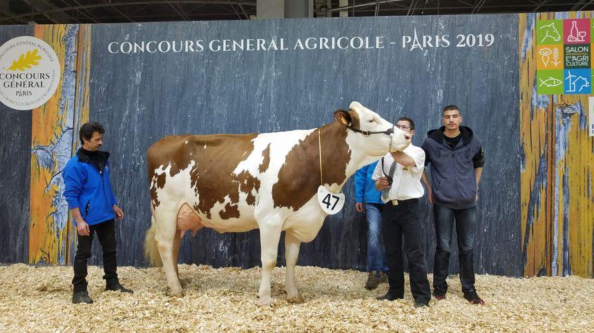 Les vaches du Doubs ont raflé la mise lors du concours de la Montbéliarde au salon de l'agriculture