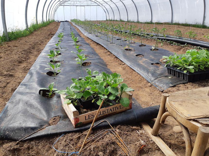 Sur cette terre sablonneuse gourmande en eau mais propice aux légumes primeurs, les premiers plants sont en croissance.