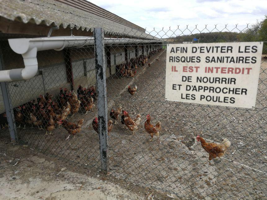 Les oeufs sont produits sur l'exploitation où vivent 27 000 poules!