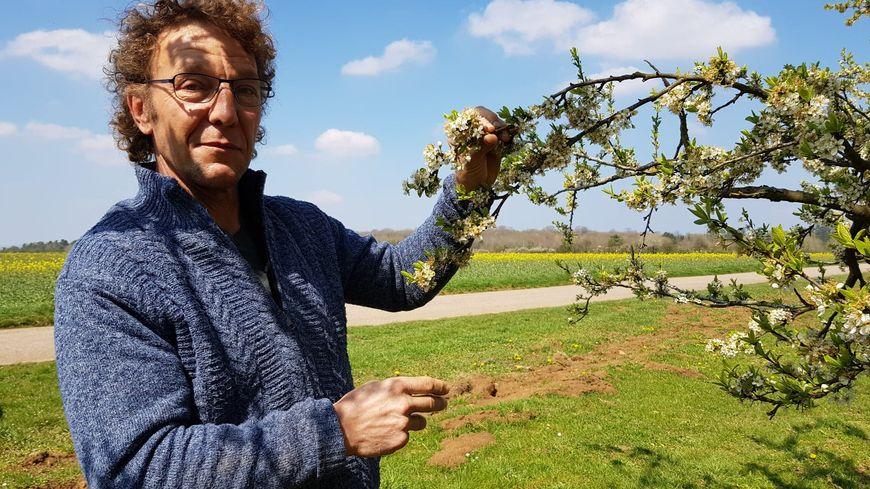 Bernard Mangin, producteur d'arbres fruitiers à Ochey.