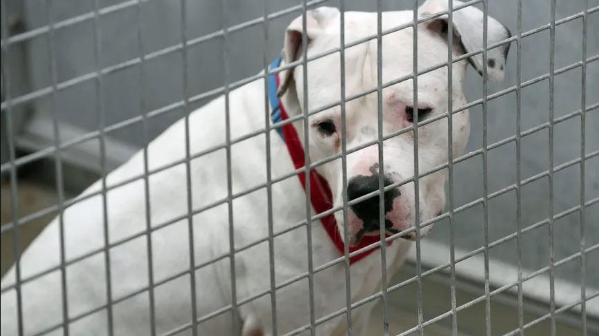 Les deux chiens ont été confisqués par la justice.
