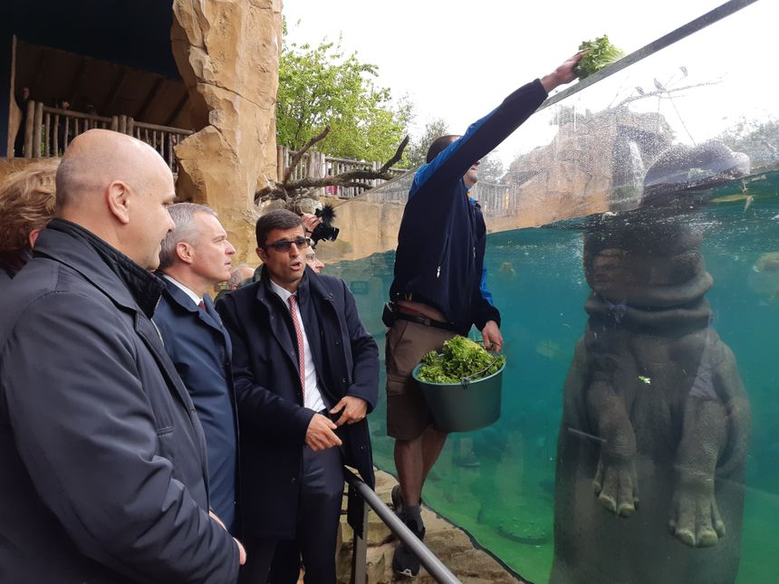 François de Rugy a assisté au repas des hippopotames du zoo de Beauval
