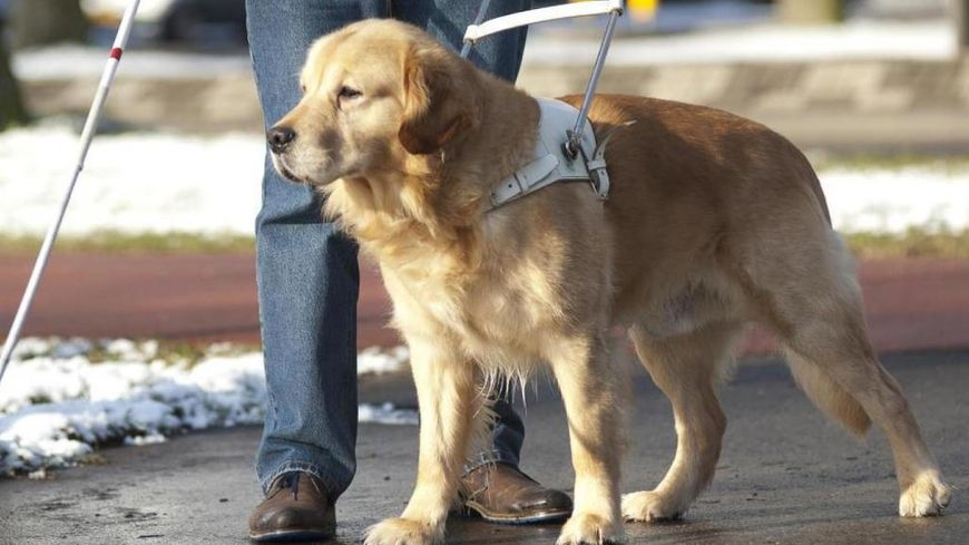 Illustration chien guide d'aveugle