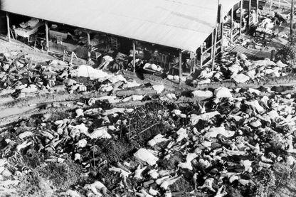 """Les corps de plusieurs centaines de personnes de la secte de Jim Jones """"Temple du peuple"""" sont éparpillés, le 21 novembre 1978, dans un champ entourant le centre culturel de la communauté à Jonestown, où Jim Jones avait établi le Temple du Peuple"""