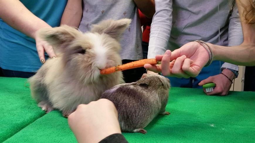 """Le lapin """"Boubou"""" a séduit les enfants."""