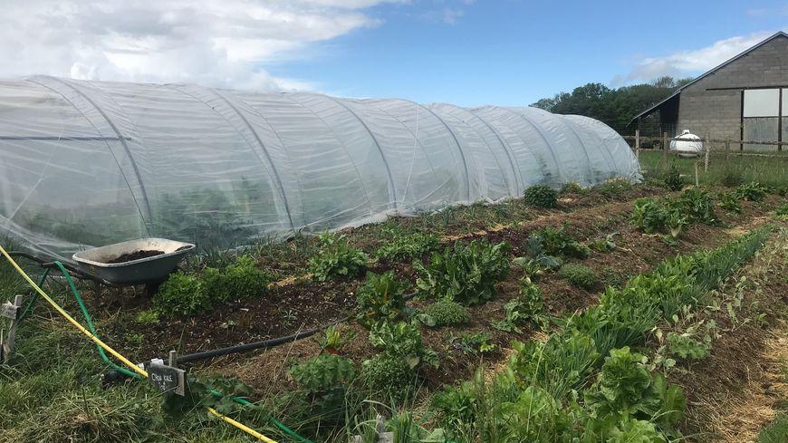Les légumes vendus seront ceux cultivés dans la ferme de Damien Pariset
