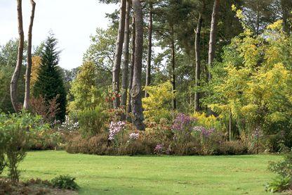 Arboretum des Grandes Bruyères situé au cœur de le forêt d'Orléans classée réserve naturelle.