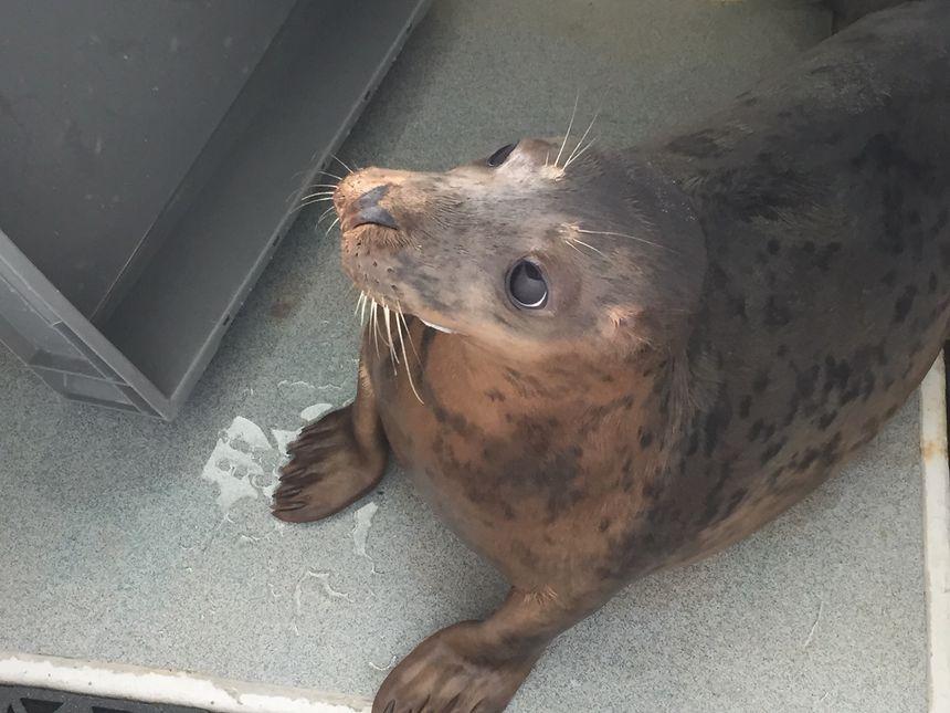 Iris et Gabrielle sont restées près de trois mois au centre de soins de l'aquarium de Biarritz.