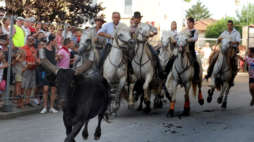 Un abrivado devrait avoir lieu à Champagne sans que le public ne puisse traverser devant le taureau.